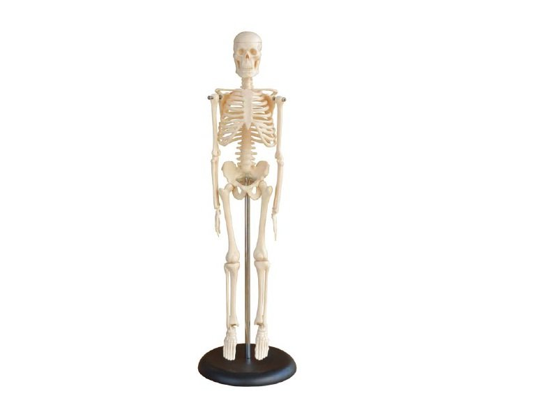 Modelo de Mini Esqueleto Humano 45 cm